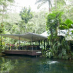 Daintree Ecolodge: A Rainforest Retreat