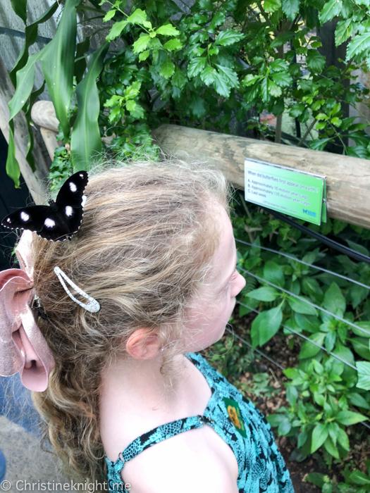 Kuranda Australian Butterfly Sanctuary Qld Australia