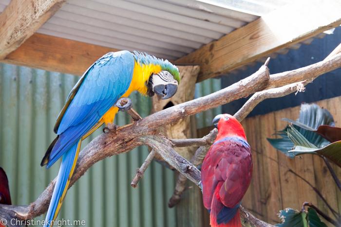 Kuranda Birdworld Australia