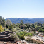 A Guide To The Botanical Gardens Blue Mountains in Mount Tomah