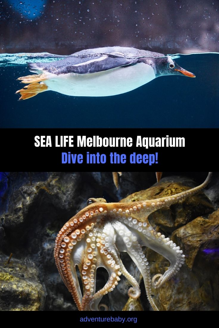 SEA LIFE Melbourne Aquarium