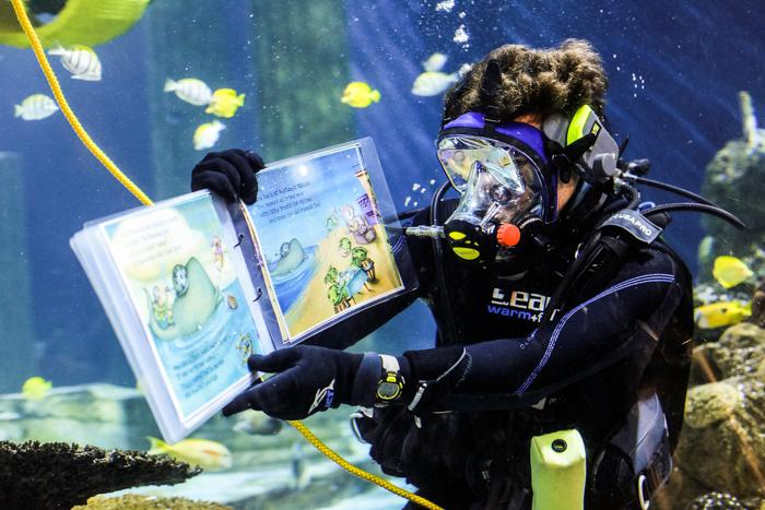 SEAL LIFE Aquarium LEGOLAND