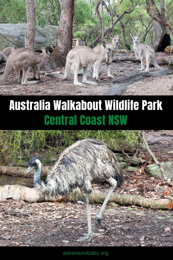 Australia Walkabout Wildlife Park: Central Coast, NSW