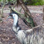 Australia Walkabout Wildlife Park: Central Coast NSW