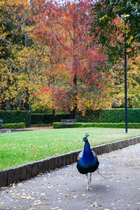 Auburn Botanic Gardens Sydney