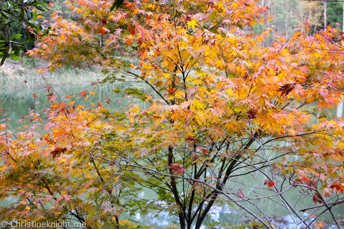 Wildwood Garden Bilpin Blue Mountains