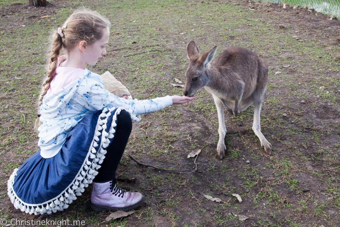 Oakvale Wildlife Park Port Stephens