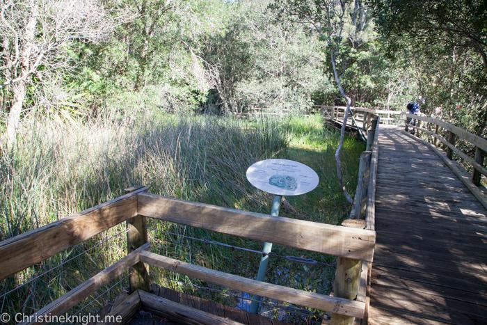 Ku-ring-gai Wildflower Garden