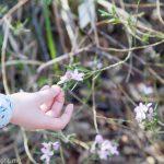 Ku-ring-gai Wildflower Garden: Sydney's Best Parks & Gardens