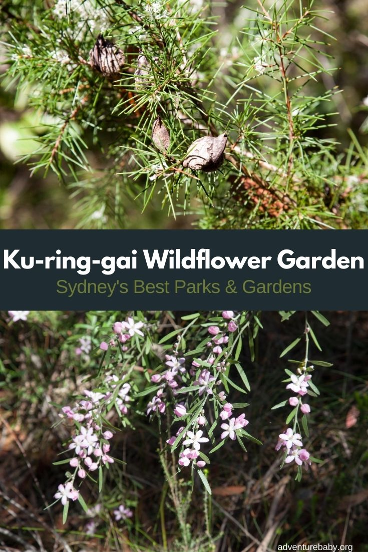 Ku-ring-gai Wildflower Garden
