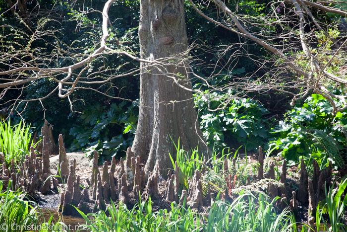 Wollongong Botanic Garden