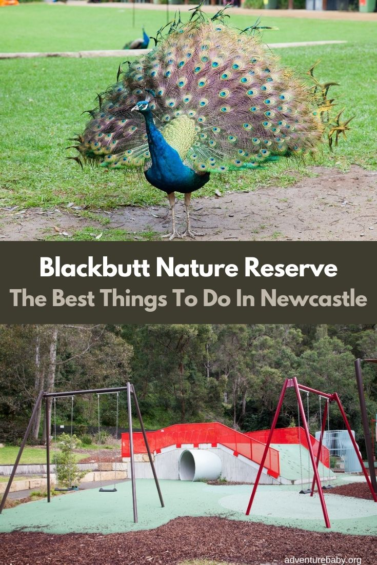 Blackbutt Nature Reserve Newcastle