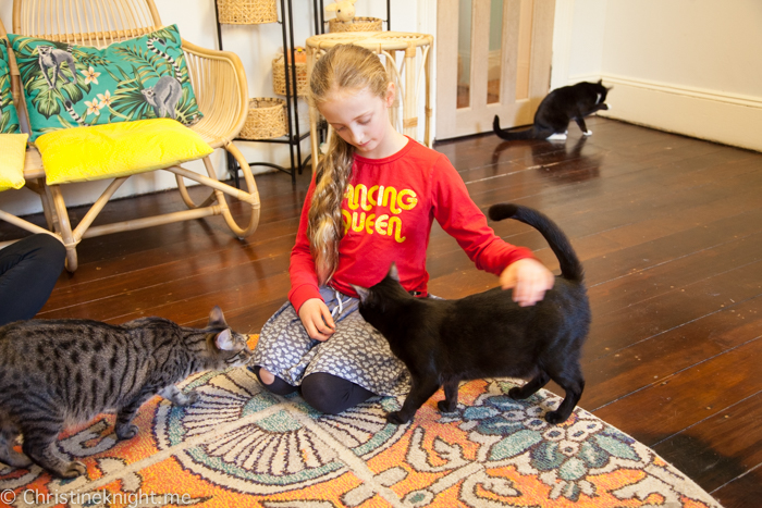 Catmosphere Cat Cafe Sydney
