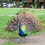 Blackbutt Reserve Newcastle, NSW Australia