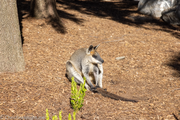 National Canberra Zoo