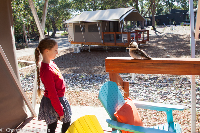Port Stephens Koala Sanctuary