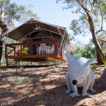 A Glamping Stay at Port Stephens Koala Sanctuary