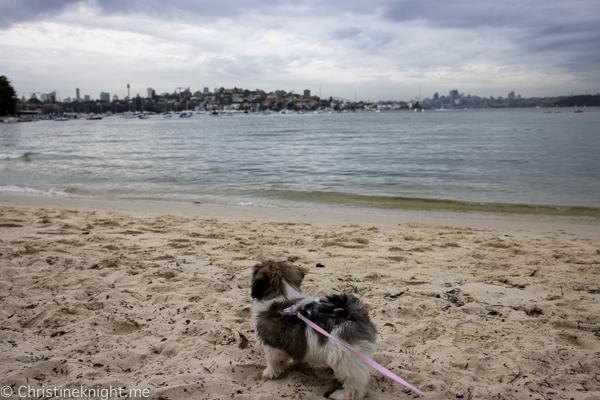 Rosy Bay Dog Beach