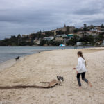 Rose Bay Dog Beach: The Best of Sydney with Dogs