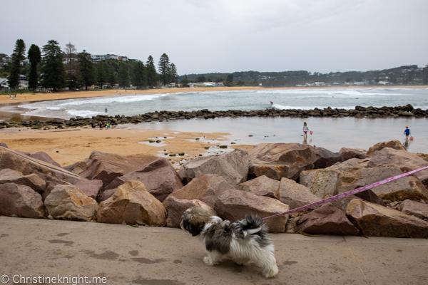 Avoca Beach NSW Australia