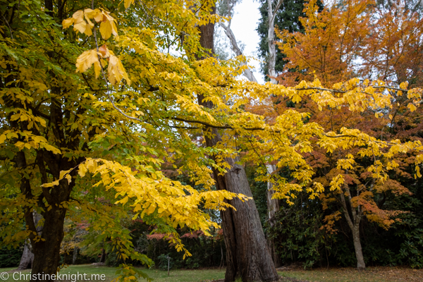 Breenhold Gardens Mt Wilson Sydney