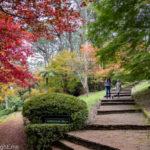 Breenhold Gardens Mount Wilson Sydney